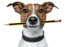 dogwriter